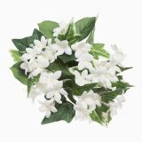 EVERYDAY CANDLE RING STEPHANOTIS WHITE 3 INCHES