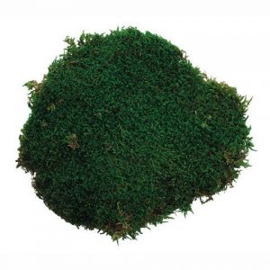 FLORAL MOSS PRESERVED SHEET 2 OUNCES